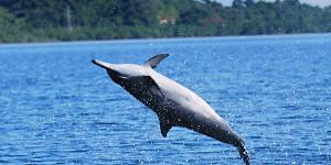 Puerto Princesa Dolphin Watching TourPuerto Princesa Dolphin Watching Tour