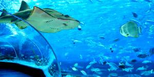 Manila Ocean Park Deep Sea Rush With 6 Attractions